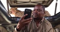 Видео: Мужчина решил сделать селфи с запрыгнувшим на крышу авто гепардом