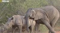 Видео: 10 случаев по-настоящему странного поведения животных