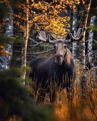 Сказочный лес существует на самом деле, и фотограф из Финляндии это доказывает