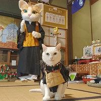 Храм Мяу-Мяу: в Японии есть уникальное святилище, в котором живут кошки