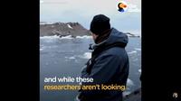 Видео: Пингвин перепугал человека, неожиданно запрыгнув к нему в лодку