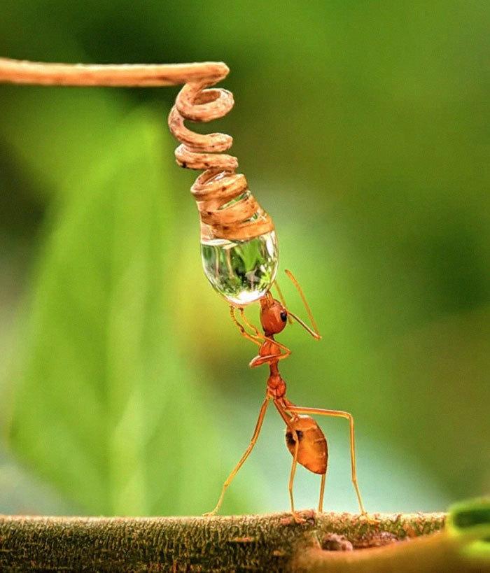 Парень из Индии делает потрясающие макроснимки насекомых, используя свой смартфон