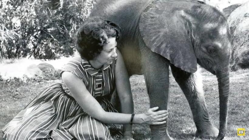 Видео: Почему многие слоны выстраивались в очередь, чтобы обнять эту женщину