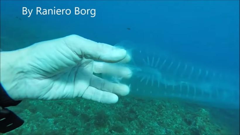 Морской призрак — дайвер снял на видео свою встречу с таинственным подводным существом
