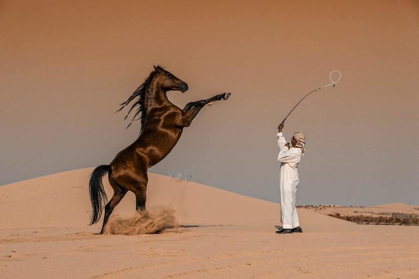 24 потрясающих фото, выигравших национальную премию Sony World Photography Awards