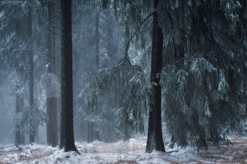 Зимняя сказка: фантастические фото заснеженных лесов