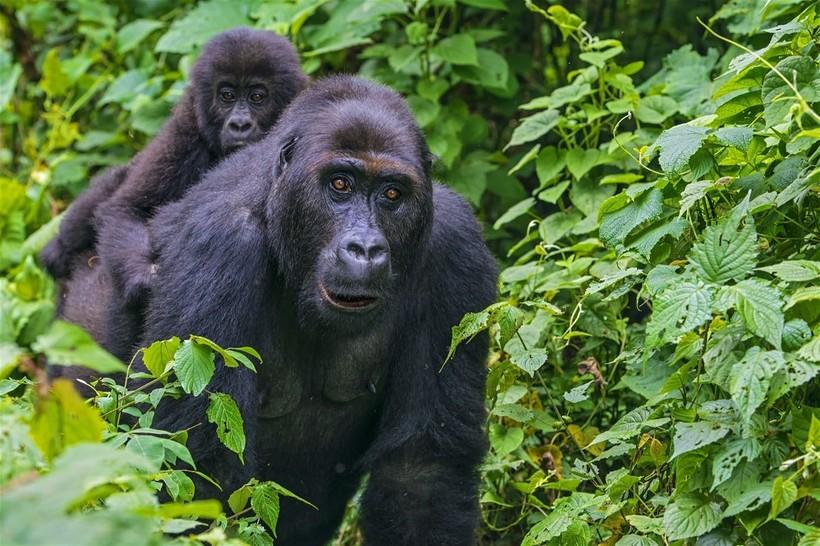 Семь онлайн-камер, благодаря которым можно наблюдать за дикой природой прямо из дома