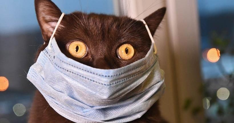 Могут ли кошки и собаки заразиться коронавирусом и стать источником заболевания