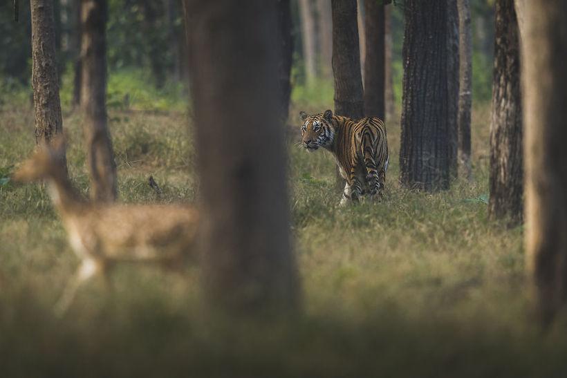 20 лучших снимков с фотоконкурса дикой природы #Wild2020