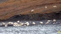 Туристы думали, что видят овец, но, приблизившись, поняли, что это другие животные