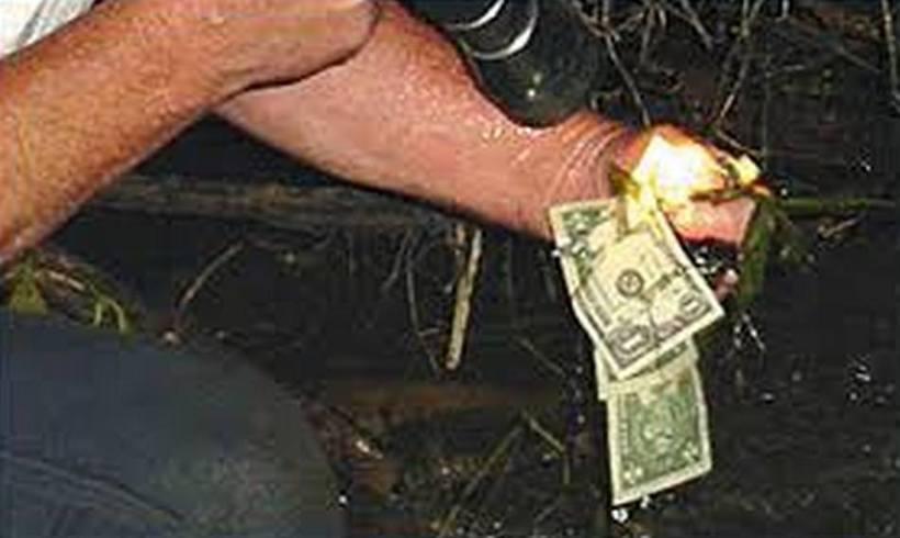 Бобры нашли сумку с украденными в казино долларами и построили из них плотину
