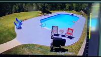 Корова в бассейне, собаки и ковбой: камера наблюдения сняла самую нереальную погоню