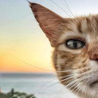 Итальянка фотографирует своих котов так, что многим захочется оказаться на их месте