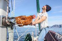 Потрясающая пара: француз путешествует на яхте со своей курицей