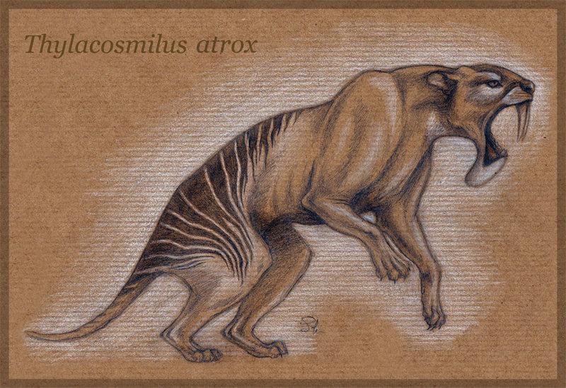 Сумчатые саблезубые тигры: родственники кенгуру, которые не умели охотиться