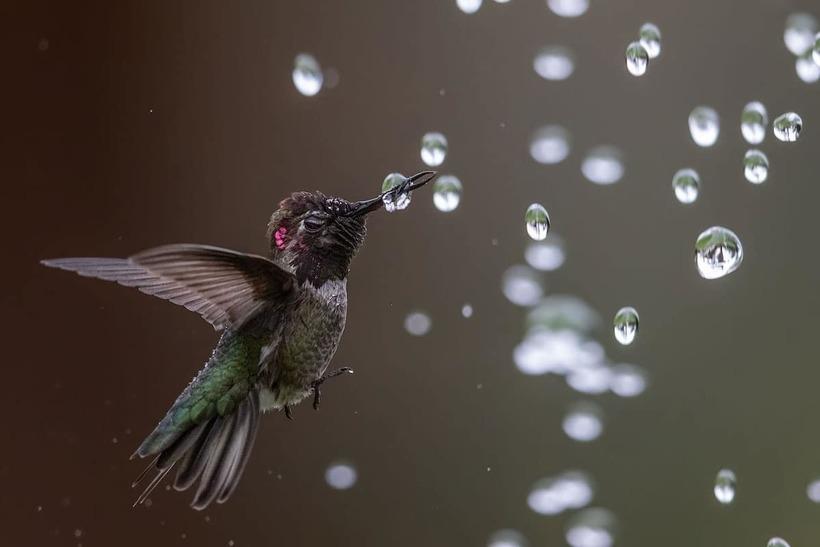 Победители фотоконкурса Audubon Photography Awards, посвященного красоте птиц