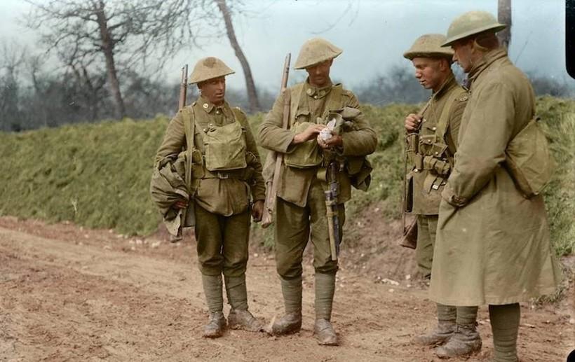 Сотни тысяч голубей поддерживали связь во времена Первой мировой войны