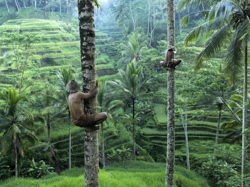 Робота научили собирать кокосы прямо с деревьев