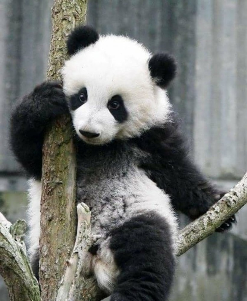 Ученые доказали, что смотреть милые видео с животными полезно для здоровья