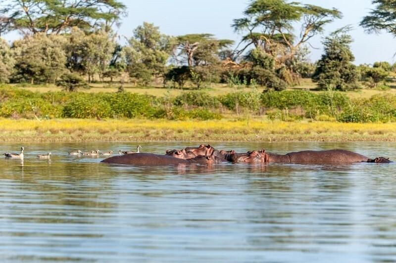 Прибрежная зона озера Чад