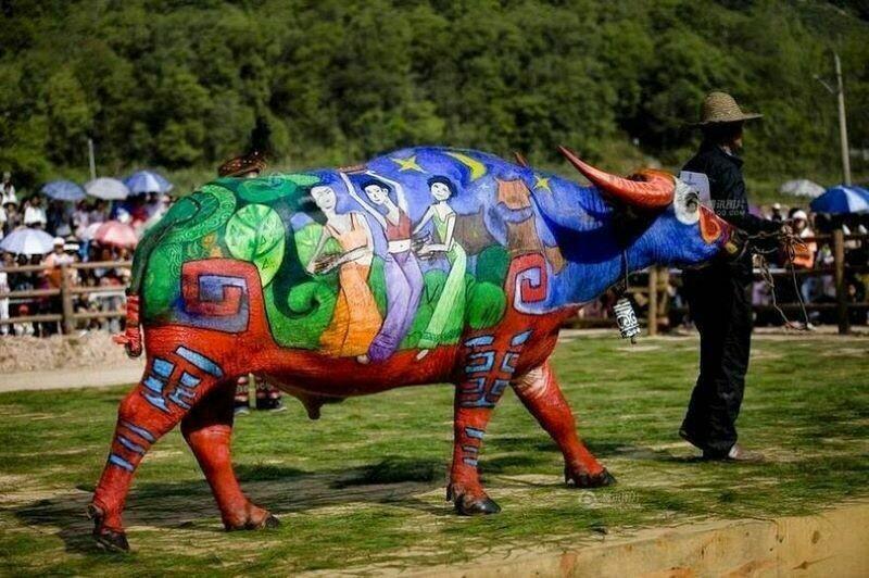 Странный конкурс боди-арта для быков и коров: где он проходит