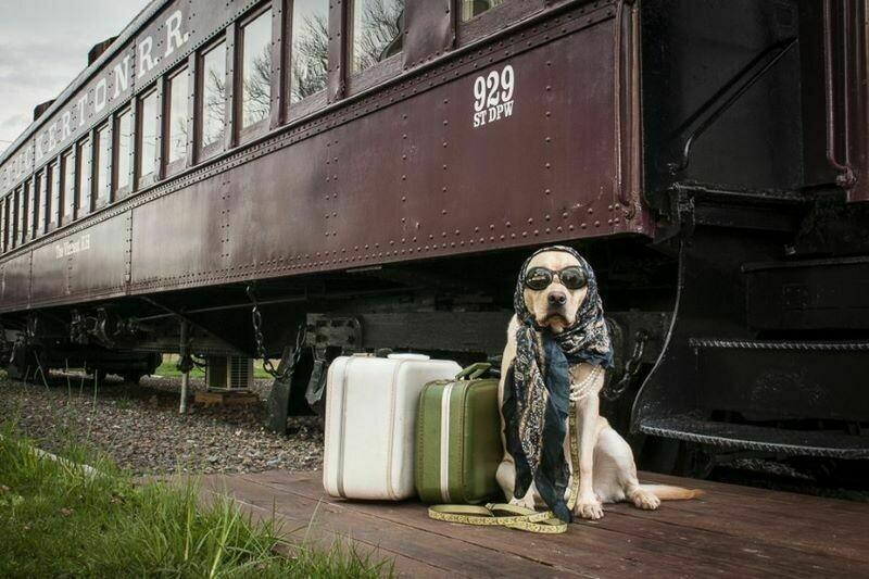 Как отправиться в путешествие с питомцем и избежать проблем в поездах