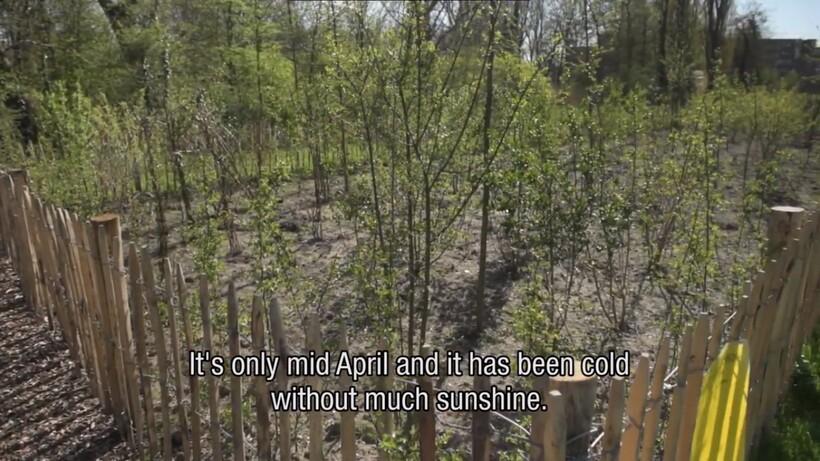 Видео: Можно ли создать крошечный лес во дворе — идея индийца, воплощенная в Голландии