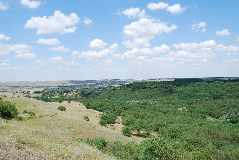 Растительность горы Куцай