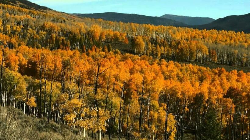 Удивительно, что веками вырубались леса и осваивались земли, но роще удалось выжить