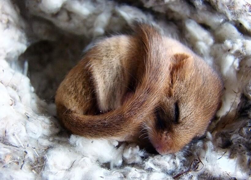 Зимняя спячка является важной частью жизни многих видов, проживающих в холодных регионах