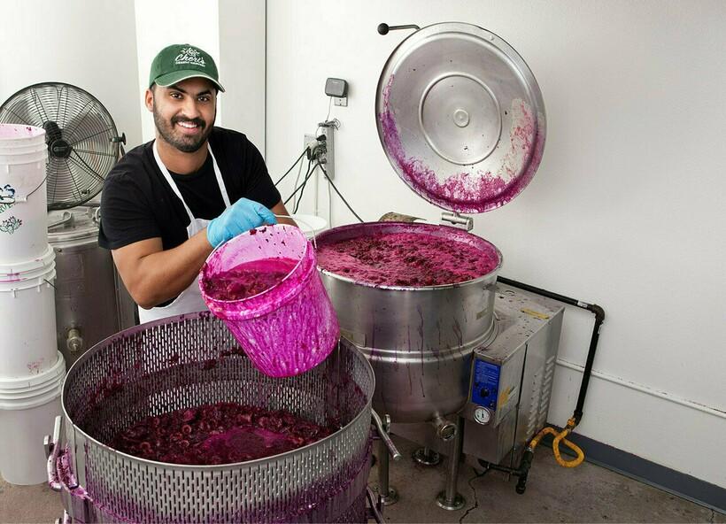 Для того чтобы получить сок из кактуса, его плоды отправляют под пресс