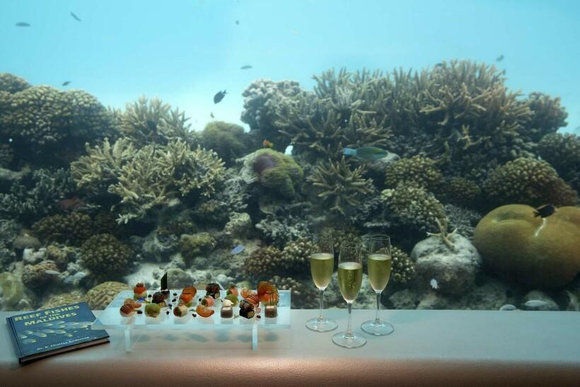 Курорт Huvafen Fushi представляет развлекательно-образовательную экскурсию SpaQuarium