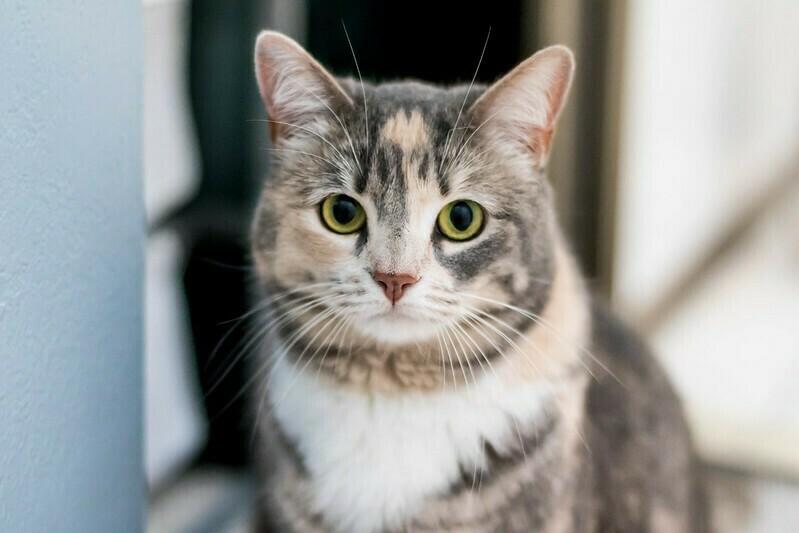 Когда кошка мнет хозяина лапами, она ведет себя как его котенок. Фото: Thryn/flickr.com