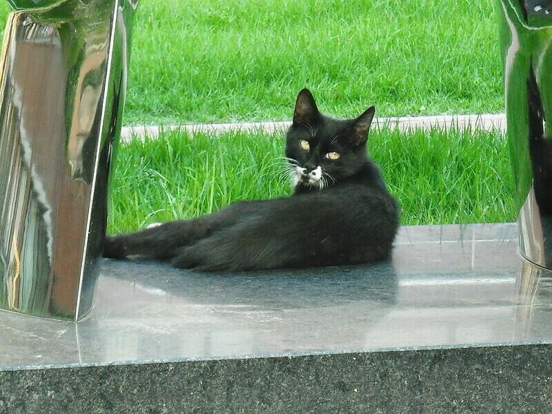 Очевидно, что кошки воспринимают нас как равных, в отличие от собак. Фото: koi ko/flickr.com