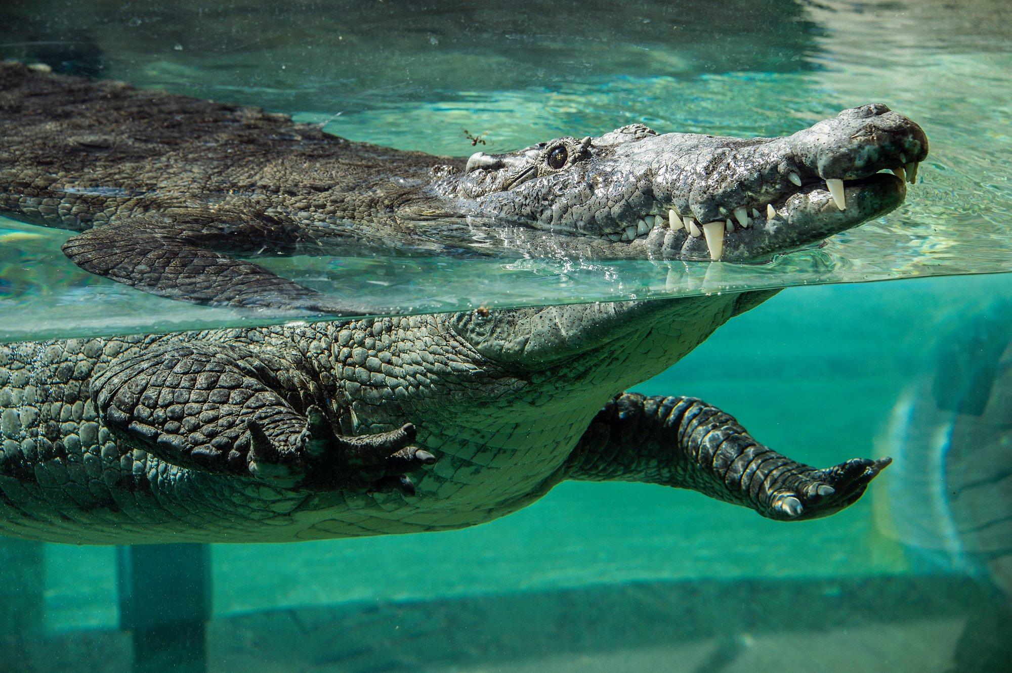 Зоопарк Майами (Зоологический парк и сады Майами-Дейд, Зоопарк Майами Метро)