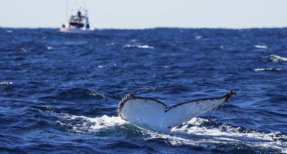 Фото дня: киты возвращаются в Австралию