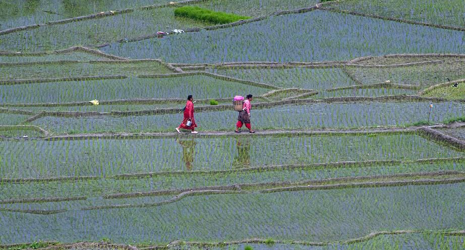 Фото дня: посадка риса