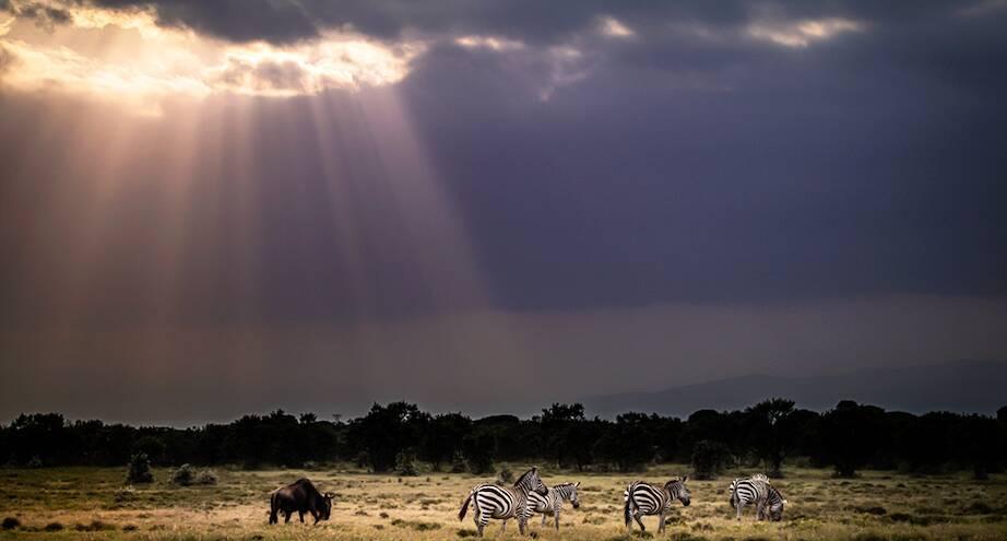 Фото дня: просторы Африки