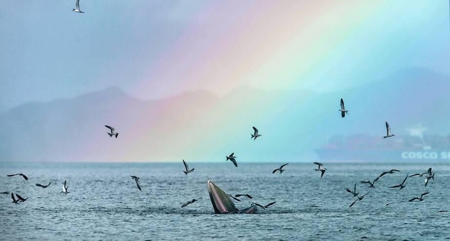 Фото дня: кит собрался пообедать